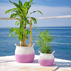 teaser_violet-garden-dreams_balkon2
