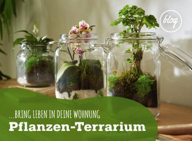 Ein trendiges Pflanzenterrarium - Wie es geht können Sie am Blog nachlesen!