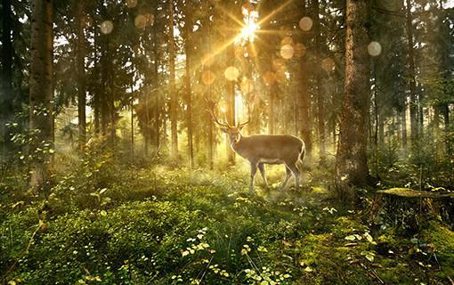 hb_0918_mysticforest