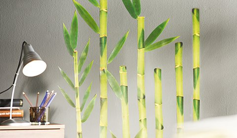 Wandtattoos im Bambus-Design von mömax.