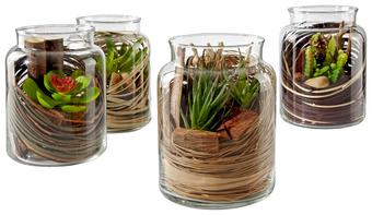 Virágcserép Tina - Áttetsző/Zöld, modern, Műanyag/Üveg (12,5/16cm)
