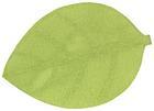 Étkezési Alátét Leaf - Zöld/Szürke, További természetes anyagok (33/50cm)