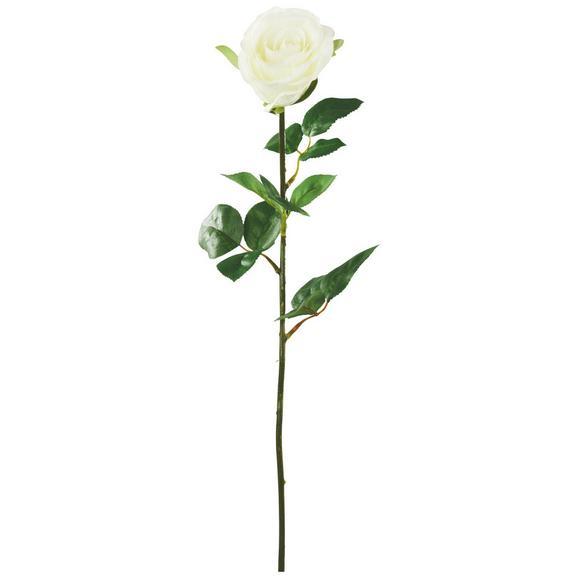 Umetna Roža Rose - zelena/krem, kovina/umetna masa (69cm) - Mömax modern living