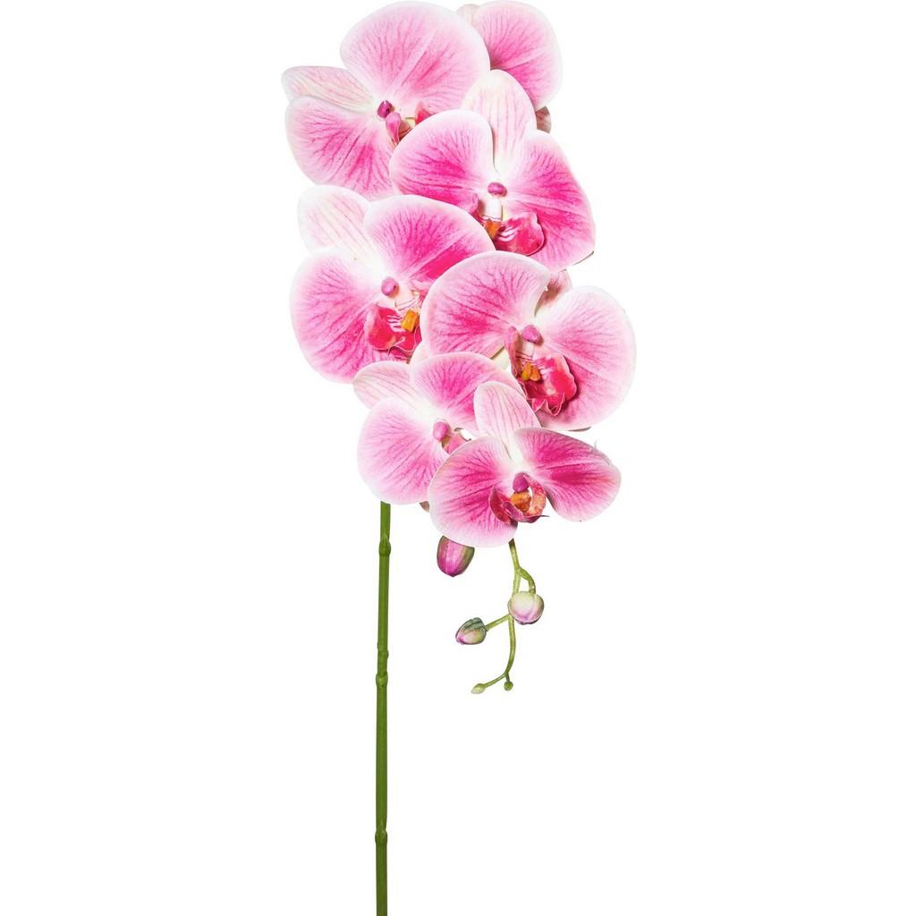 Orhideja Sissi
