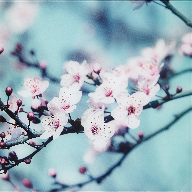 Glasbild Closeup Blossom, ca. 30x30x2cm - Multicolor, MODERN, Glas (30/30/2cm) - MÖMAX modern living