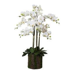 Kunstorchidee in Weiß im Rindentopf H ca. 92 cm - Dunkelgrün/Weiß, Basics, Kunststoff (92 cm)