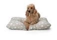 Haustierkissen Pet in Hellbraun, ca. 60x80cm - Hellbraun, Textil (60/80cm) - Mömax modern living