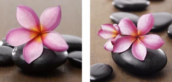Glasbild Rosy Orchid, ca. 20x20x1,7cm - Multicolor, MODERN, Glas (20/20/1,7cm) - MÖMAX modern living