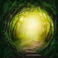 Glasbild Tunnel Forest, ca. 30x30x2cm - Multicolor, MODERN, Glas (30/30/2cm) - Mömax modern living