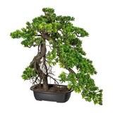 Kunstpflanze Bonsai in Grün mit Schale H ca. 55/45 cm - Dunkelbraun/Grün, Kunststoff (55/45cm)