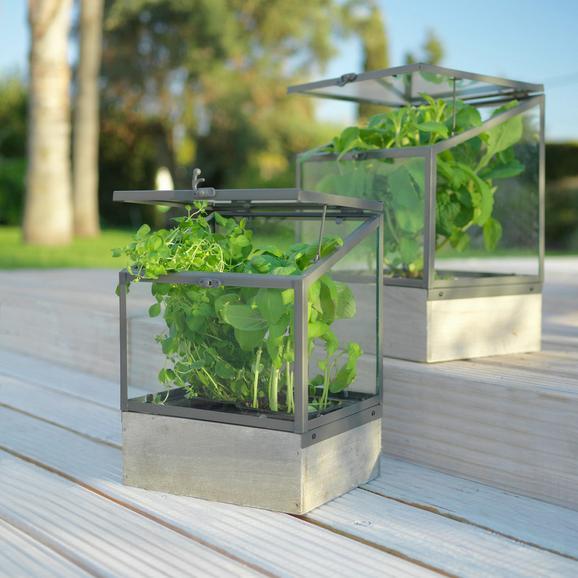 Rastlinjak Peter - aluminij, Romantika, kovina/steklo (24/21/31cm)
