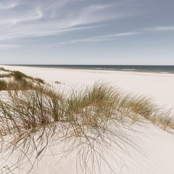 Glasbild Coastal Dune, ca. 20x20x1,7cm - Multicolor, MODERN, Glas (20/20/1,70cm) - MÖMAX modern living
