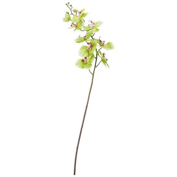 Phalänopsis Gundula - Rot/Grün (98cm) - Mömax modern living