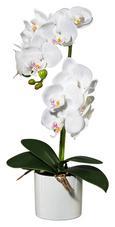 Umetna Rastlina Phalänopsis - lila/zelena, Romantika, kovina/umetna masa (45cm)