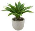Kunstpflanze Agave in Grün - Grün, KONVENTIONELL, Kunststoff (30cm) - MÖMAX modern living