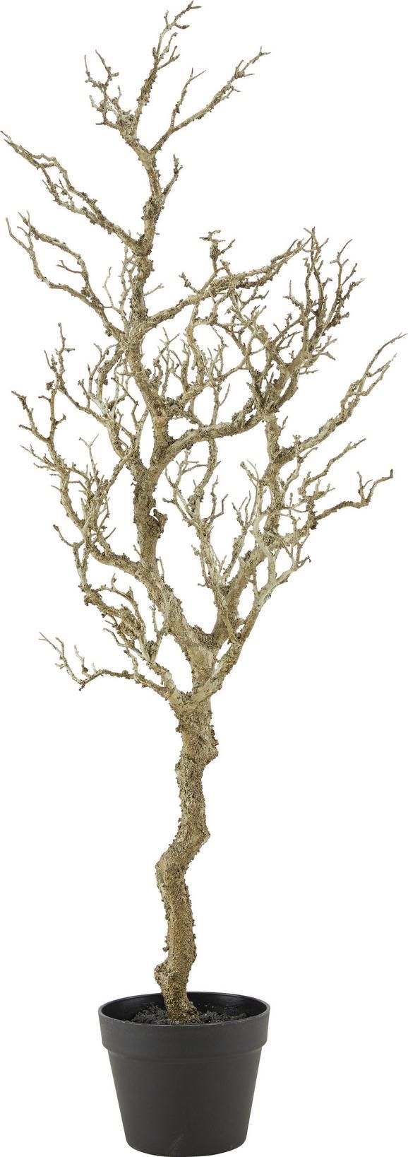 Okrasna Veja Sam - naravna, Konvencionalno, umetna masa (120 cmcm)