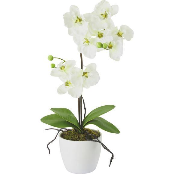 Umetna Rastlina Orchidee - lila/roza, kovina/umetna masa (11/60cm) - Mömax modern living