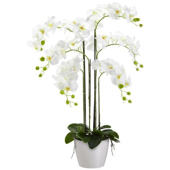 Műnövény Phalänopsis - Zöld/Fehér, Műanyag (90 cmcm)