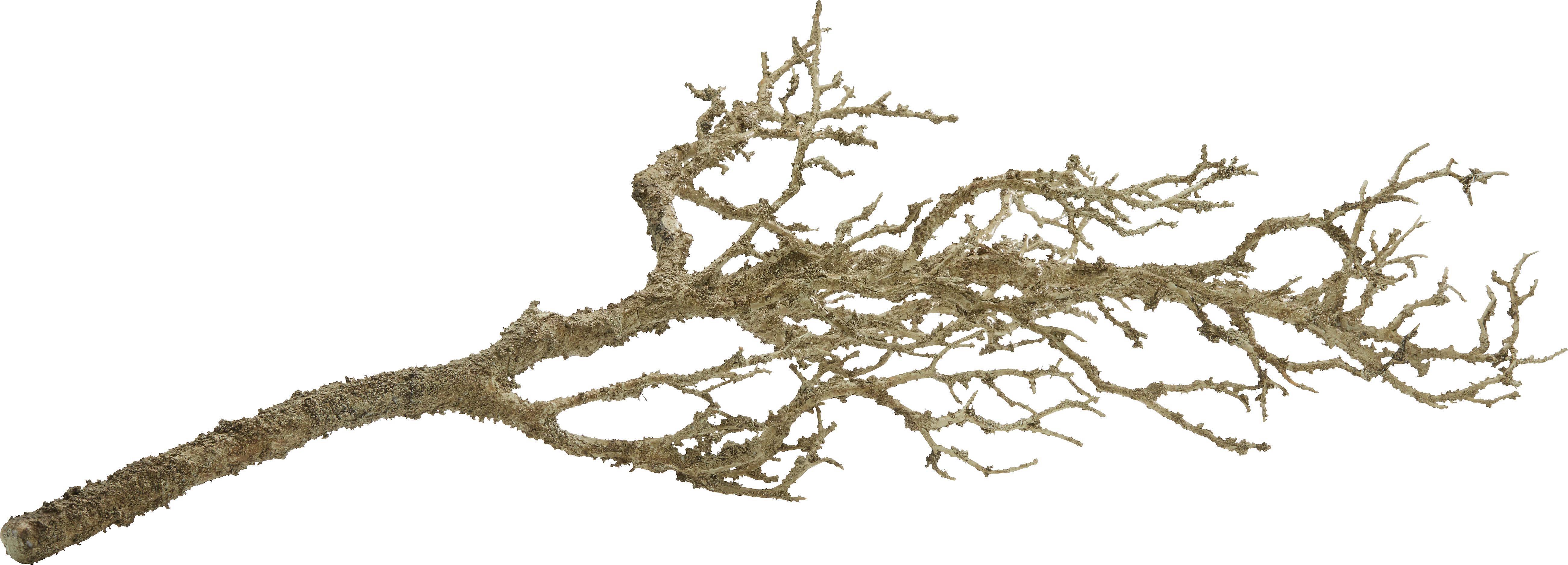 Dekozweig Sam in Natur - Naturfarben, KONVENTIONELL, Kunststoff (78 cmcm)