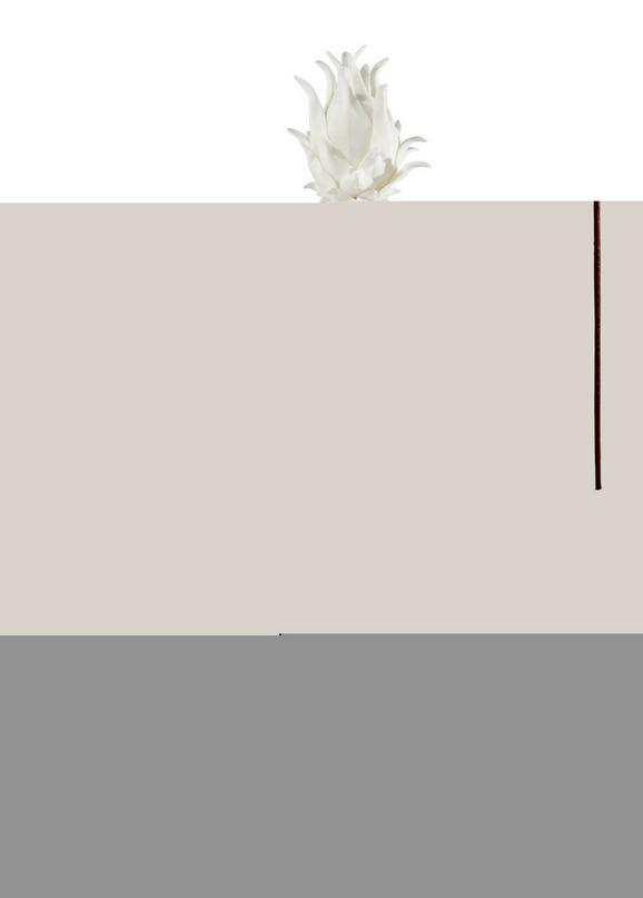 Dekorág Agave - Barna/Fehér, Műanyag (75cm) - Mömax modern living