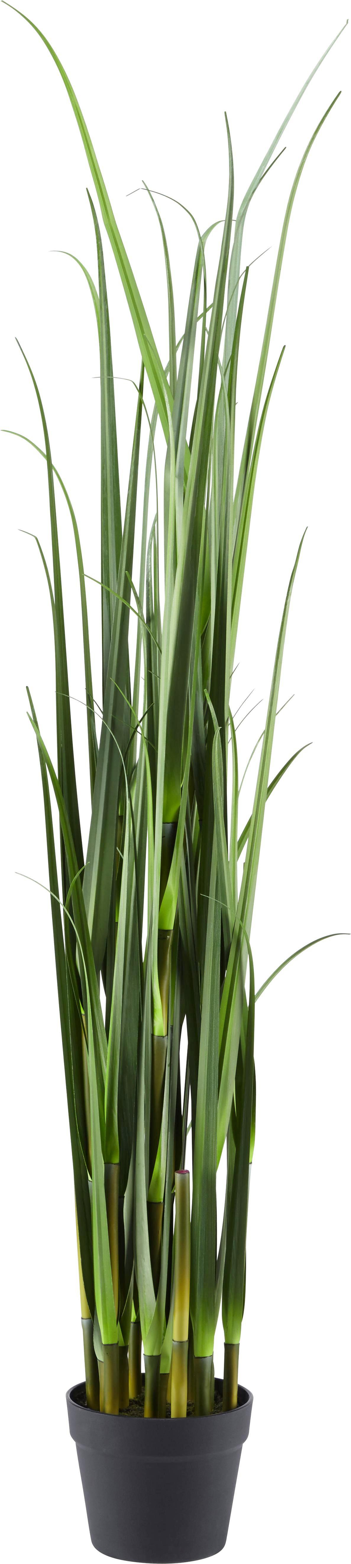 Kunstpflanze Mica in Grün - Grün, Kunststoff (120cm) - MÖMAX modern living