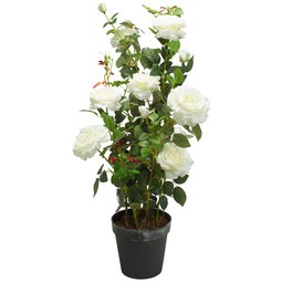 Rose Rosenstock Weiß - Weiß/Braun, Basics, Kunststoff (112cm)