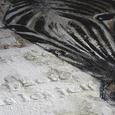 Keilrahmenbild Animals, ca. 100x100cm - Schwarz/Weiß, LIFESTYLE, Holz/Textil (100/100cm) - Mömax modern living