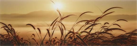 Glasbild Grass Fog, ca. 33x98x2cm - Multicolor, ROMANTIK / LANDHAUS, Glas (33/98/2cm)