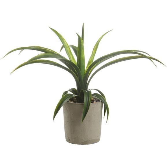 Umetna Rastlina Agave Ii - zelena, Konvencionalno, umetna masa (35 cmcm) - Mömax modern living