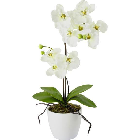 Plantă Artificială Orchidee - roz aprins/mov, plastic/metal (11/60cm) - Modern Living