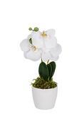 Kunstpflanze Phalänopsis Versch. Farben - Hellrosa/Lila, Kunststoff (24cm)