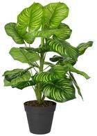 Kunstpflanze Olaf Verschiedene Modelle - Grün, Kunststoff (45cm)