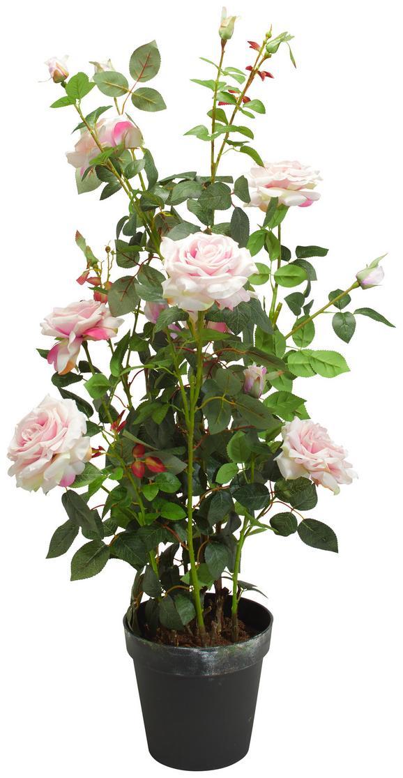 Rose Rosenstock Grün/rosa - Rosa/Braun, Basics, Kunststoff (112cm)
