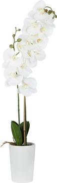 Orhideja Yannik - zelena/bela, kovina/umetna masa (70cm)