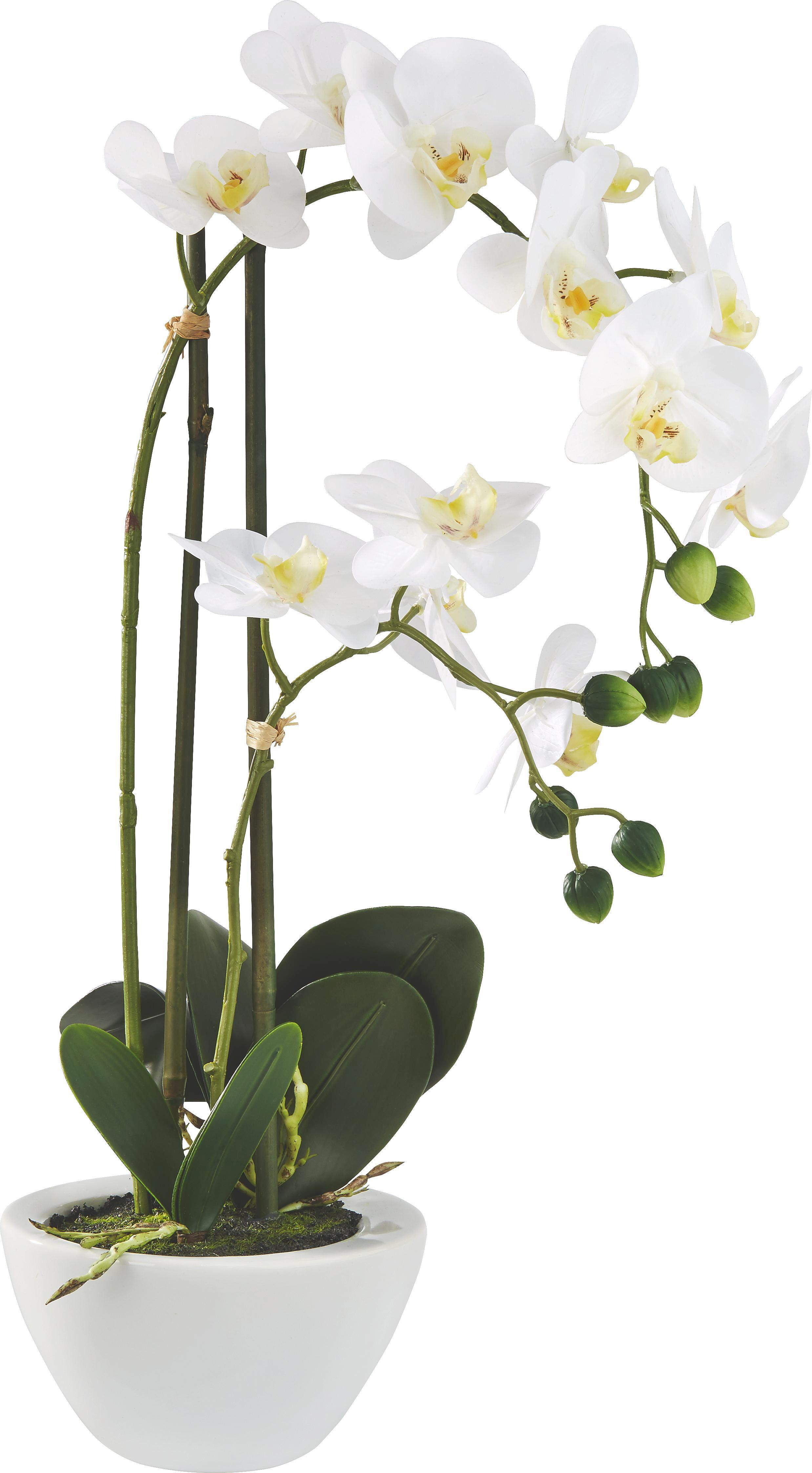 Lepkeorchidea Marie - fehér/zöld, műanyag/textil (50cm) - MÖMAX modern living