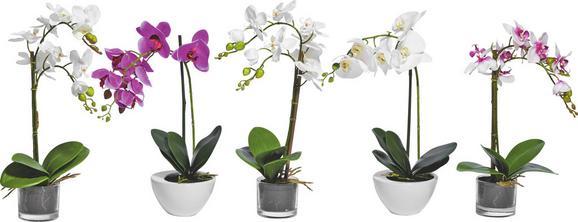 Lepkeorchidea Többféle Színben - lila/rózsaszín, műanyag/textil (52cm) - MÖMAX modern living