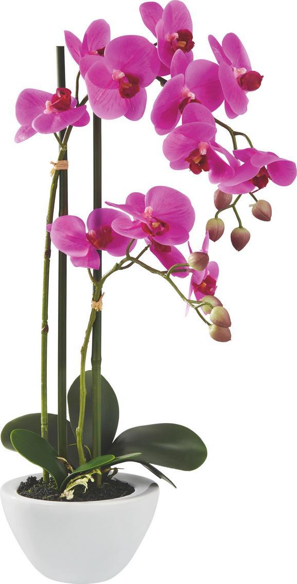 Orhideja Maire - lila/zelena, kovina/umetna masa (50cm) - Mömax modern living