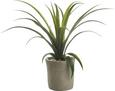 Umetna Rastlina Agave - zelena, Konvencionalno, umetna masa (35 cmcm) - Mömax modern living
