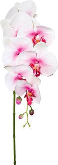 Orhideja Sissi - zelena/svetlo roza, Konvencionalno, kovina/umetna masa (87 cm)