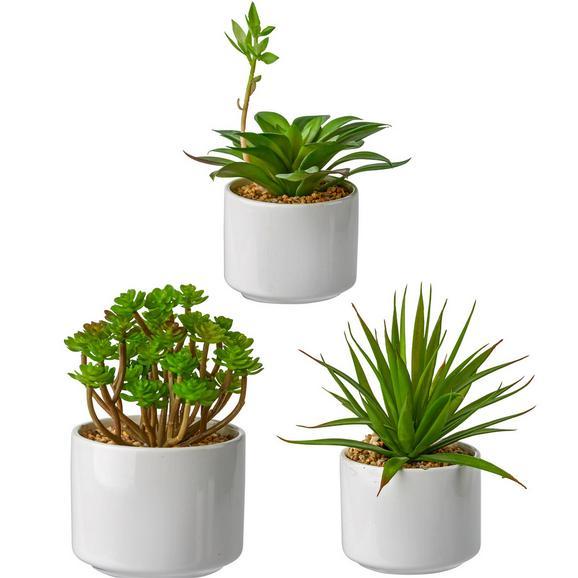 Umetna Rastlina Helena - zelena, umetna masa (18cm) - Mömax modern living