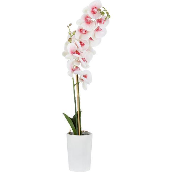 Orhideja Yannik - zelena/svetlo roza, kovina/umetna masa (70cm)