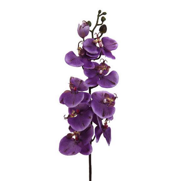 Lepkeorchidea Gundula - Lila/Zöld, Műanyag (98cm) - Mömax modern living