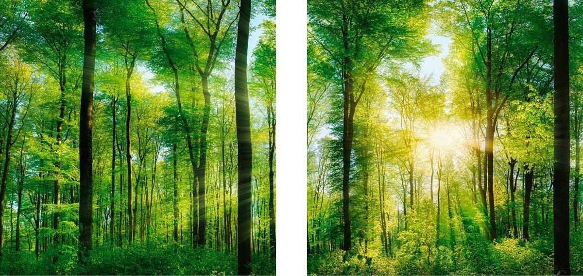 Glasbild Green Sunshine, ca.20x40x1,7cm - Multicolor, KONVENTIONELL, Glas (20/40/1,7cm)