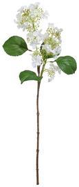 Kunstblume Hortensie Weiß - Weiß/Braun, Basics, Kunststoff (64cm)