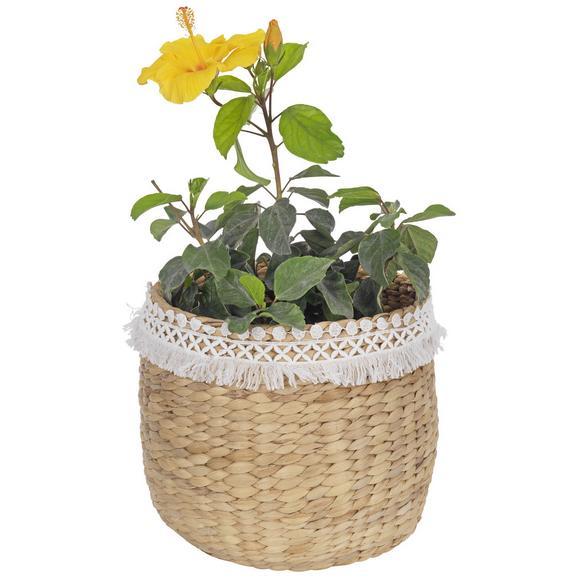 Vas Ornamental Pentru Ghiveci Jimmy - alb/culoare natur, lemn (28/24cm) - Zandiara