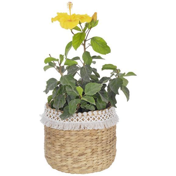Vas Ornamental Pentru Ghiveci Jimmy - alb/culoare natur, lemn (22/20cm) - Zandiara