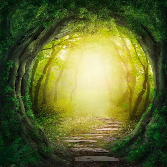 Üvegkép Tunnel In The Forest - multicolor, modern, üveg (30/30/2cm) - MÖMAX modern living