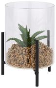 Dekopflanze Sukkulente Versch. Designs - Klar/Schwarz, LIFESTYLE, Glas/Kunststoff (10,5/15cm)