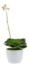 Kunstpflanze Marvin in Grün/Weiß - Grün, Kunststoff (15cm) - Mömax modern living