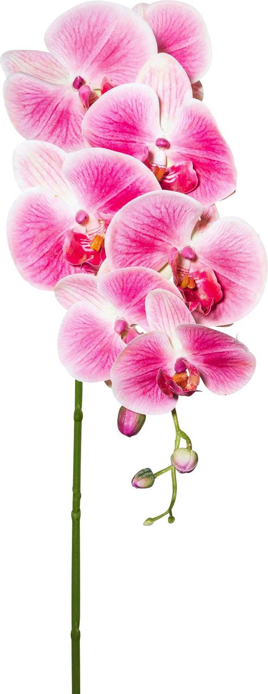 Orhideja Sissi - temno roza/zelena, Konvencionalno, kovina/umetna masa (87cm)